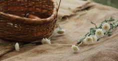 Remedio casero para la gastritis: manzanilla, ¡apunta!