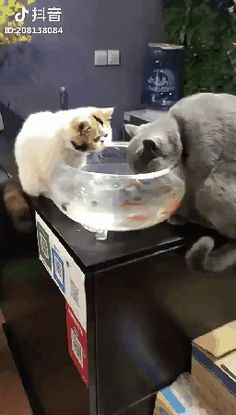 These are my fishes, they can not be eaten
