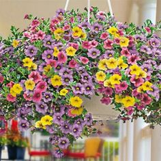 "Calibrachoa (Pastel Belles) collection includes, 9 plants, 10"" white hanging basket with saucer, 16"" hanger and soil. $"