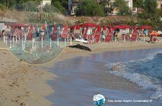 """Delfino spiaggiato morto a Le Canne, nella marina di Pulsano. """"Impigliata in una rete da pesca"""" - http://www.grottaglieinrete.it/it/delfino-spiaggiato-morto-a-le-canne-nella-marina-di-pulsano-impigliata-in-una-rete-da-pesca/ -   delfino, tartaruga - #Delfino, #Tartaruga"""