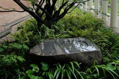home - Dan Pearson Studio Outdoor Landscaping, Outdoor Plants, Outdoor Gardens, Water Pond, Water Garden, Landscape Elements, Landscape Design, Pond Design, Garden Design