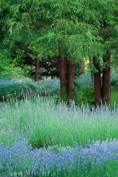 ✯ Lavender Farm - Cape Cod, Massachusetts