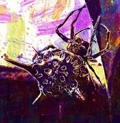 "New artwork for sale! - "" Spider Arachnid Insect Close  by PixBreak Art "" - http://ift.tt/2w1a4x3"