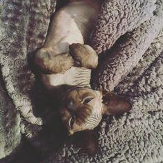 #trufflethedevon