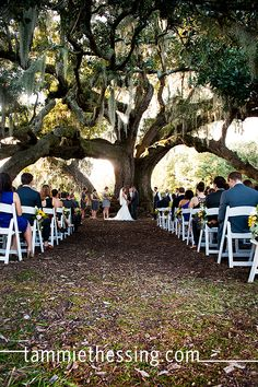 Audobon Park Tree of Life Wedding Picture_0030