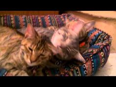 Video of the Day - The Licking Train. Spoiler Alert: Someone is getting a free ride. http://moderncat.com/articles/video-day-licking-train/69835