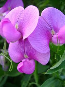 I do ... Inspiration: Floral Friday - Purple & White