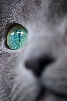 Green/blue eye. Cat