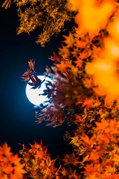 The moon shining through the fall leaves. This screams to me that fall is here!