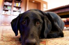 Worried about your dog dying? The Biggest Mistake Pet Owners Make at the End