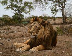 """Jorge Rajadell, """"León"""" óleo 60 x 80 cm."""