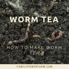 How to make Worm Tea Compost Tea, Garden Compost, Worm Composting, Organic Soil, Organic Gardening, Vegetable Gardening, Red Wiggler Worms, Red Worms, How To Make Compost