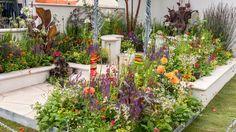 See New Horizon Garden at RHS Hampton Court Palace Flower Show / RHS Gardening Hampton Court Flower Show, Rhs Hampton Court, The Hamptons, Palace, Gardening, Flowers, Garden Ideas, Plants, Gardens