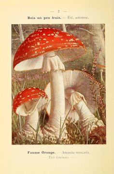 1 (1912) - Nouvel atlas de poche des champignons comestibles et vénéneux. - Biodiversity Heritage Library