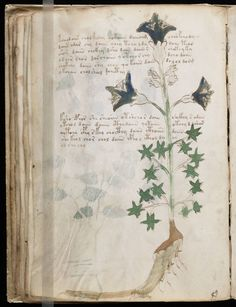 The Indecipherable Voynich Manuscript | northatlanticblog