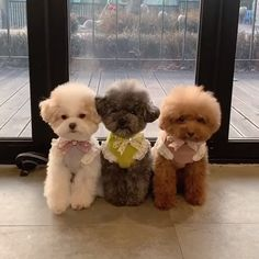 Cutest Poodle Puppies Source by marilynpapperel The post Cutest Toy Poodle Puppies appeared first on Bennett Dogs. Cute Baby Dogs, Cute Little Puppies, Cute Little Animals, Cute Dogs And Puppies, Cute Funny Animals, Cutest Dogs, Funny Dogs, Doggies, Cutest Puppy Ever
