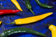 red green and yellow mexican hot chili peppers on blue background