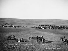 Cowboys stretching a steer at round-up, Maple Creek area, Saskatchewan. Date: 1897 Photographer/Illustrator: Moodie, Mrs. J.D. Maple Creek, Saskatchewan .. Steer stretched to examine brand. Bill Hammond on horse, centre.