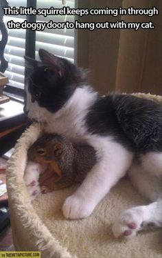 Squirrel and Cat Best Friends cute animals cat cats adorable animal kittens pets kitten squirrel funny animals I Love Cats, Crazy Cats, Cute Cats, Funny Kitties, Adorable Kittens, Funny Animal Pictures, Cute Pictures, Fail Pictures, Random Pictures