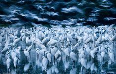 20 best wildlife photos (16)