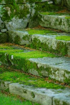 I'll meet you at the garden steps! Garden Steps, Garden Paths, Garden Landscaping, Landscaping Ideas, Purple Home, Stairway To Heaven, Wabi Sabi, Dream Garden, My Secret Garden