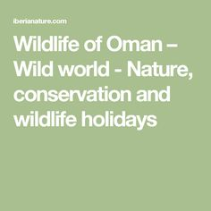 Wildlife of Oman – Wild world - Nature, conservation and wildlife holidays