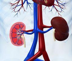 10 věcí, kterými škodíte svým ledvinám. Je to i voda!