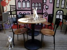 Cat Cafe to Open in San Francisco