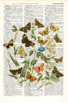 Spring decor Wild Flowers and butterflies Art print- Dictionary art Wall decor butterflies and flowers gift print flowers BFL035