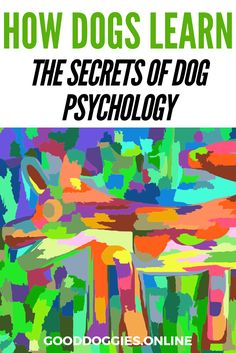 If you've been looking into training your dog, you've probably thought about how dogs learn. But a good old psych lesson will set you on the right track.