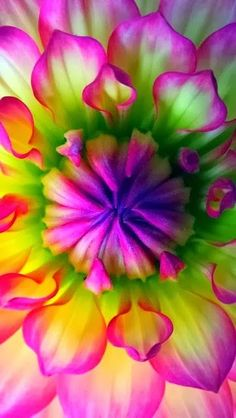 nice Beautiful Flower- would love to do an ombre with these colors!!