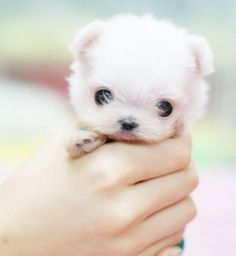 teeny tiny puppy