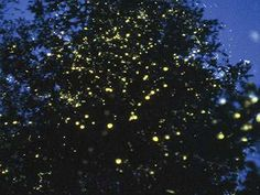 The Best Places for Firefly-Watching in the Philippines