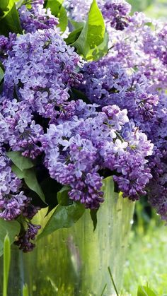 Lilac, grass, twigs, and leaves Lilac Flowers, Purple Lilac, Spring Flowers, Beautiful Flowers, Wallpaper 480x800, Lilac Plant, Syringa Vulgaris, Lily Of The Valley, Shrubs