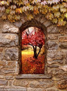 landscape, window, color, autumn