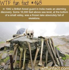 WTF Fun Facts is updated daily with interesting & funny random facts. We post about health, celebs/people, places, animals, history information and much more. New facts all day - every day! Wow Facts, Wtf Fun Facts, Funny Facts, Random Facts, Strange Facts, Random History Facts, Strange History, The More You Know, Did You Know