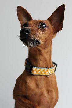 WEIM / Fedor retro obojok pre psa #dog #collar #dogcollar #handmade #homemade