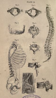 Systematic human physiology, anatomy, and hygiene: - Biodiversity Heritage Library