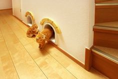 The Ultimate Dream House for a Cat