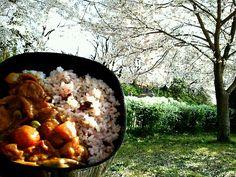 桜は最高!花吹雪を浴びながら、カレーをひとり食べながら。 - 25件のもぐもぐ - ひとりde花見withチキンカレー by manimaaru