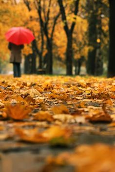 The focal point in this fall picture is the red umbrella that draws our attention because of the different color it brings into this photo. Autumn Day, Autumn Leaves, Autumn Walks, Golden Leaves, First Day Of Autumn, Autumn Girl, Fall Days, Red Umbrella, Photo D Art