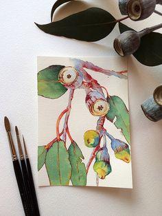 Original watercolor painting of Eucalyptus branch by Zoya Makarova Watercolor Flowers, Watercolor Paintings, Original Paintings, Watercolours, Botanical Drawings, Botanical Art, Papel Fabriano, Australian Flowers, Flower Art