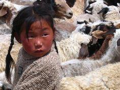 Among the Sheep. Mongolia