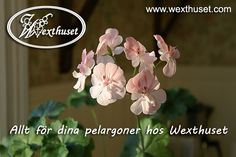Wexthuset - Trädgårdsbutiken på nätet