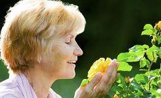 Mehr Power für Rosen -  Natürliche Wege, Rosen zu stärken, gibt es viele, wenngleich keine Methode für jede Sorte und jede Bodenart gleich wirksam sein kann. Doch die passende Maßnahme, kombiniert mit guter Sortenwahl, macht Hoffnung auf eine blütenreiche Gartensaison, in der das Spritzmittel getrost im Schuppen bleiben kann. Gardening, Garden Sculpture, Fruit, Outdoor Decor, Crop Protection, Flower Beds, Roses Garden, Flowers Garden, Shade Perennials