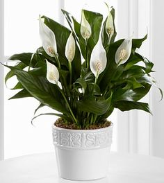 Best air-filtering houseplants The air inside your home is typically more polluted than the air outdoors. Specific plants can actually filter out the