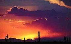 Sonoran Desert Arizona  http://lib.store.yahoo.net/lib/dawno/FRONTravensflight.jpg
