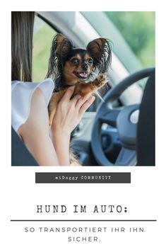 || #Hund || Ideen || #Hunde || Tipps || Tricks || Ideen || Liebe || Welpen || Bilder || #Sicherheit
