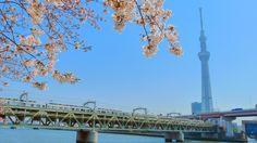 SAKURA ASAKUSA, Tokyo, Japan