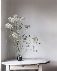 Queen Anne's Lace in all its glory. by the_dailys Love Flowers, Dried Flowers, Beautiful Flowers, Deco Floral, Arte Floral, Floral Design, Queen Anne Lace, Arreglos Ikebana, Country Style Magazine